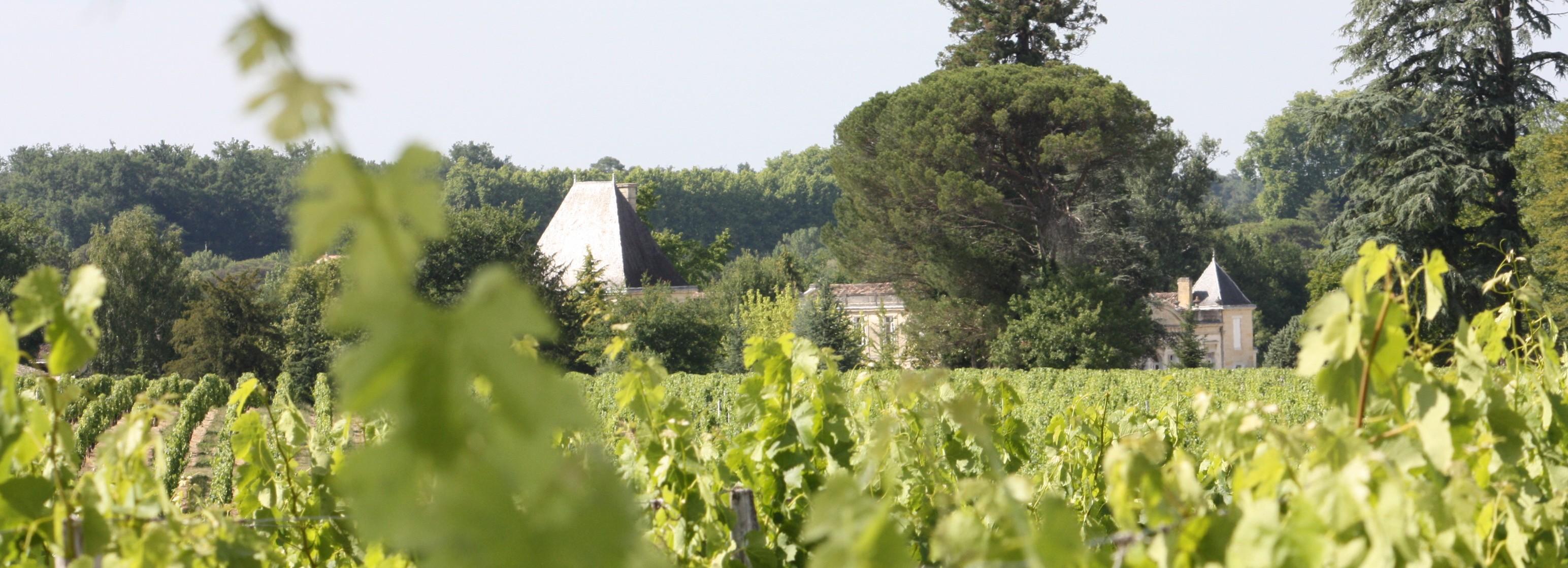 vignes_banniere_6